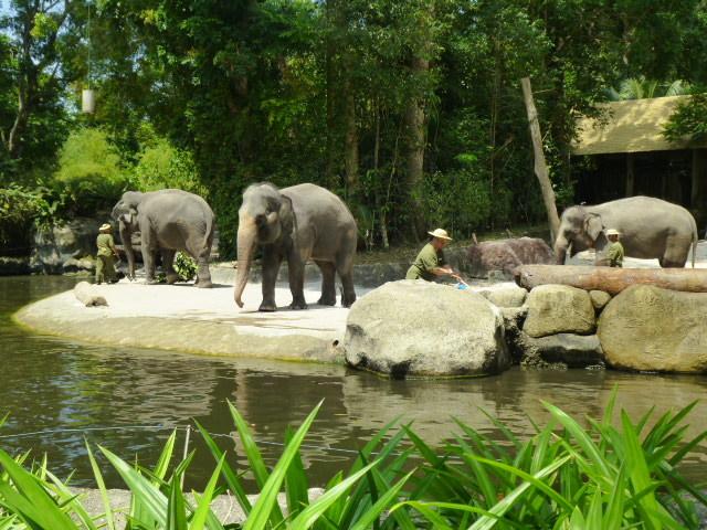 どうぶつえ~ん(Singapore zoo)_d0336014_01231592.jpg