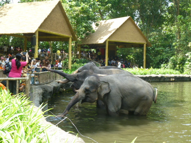 どうぶつえ~ん(Singapore zoo)_d0336014_01243336.jpg