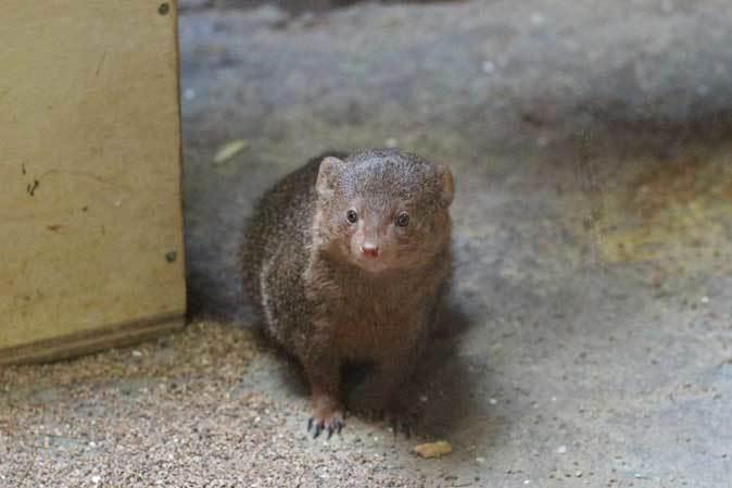 3月の上野動物園~マヌル・ブームとソルジャー・ハシビロコウ_b0355317_22165653.jpg
