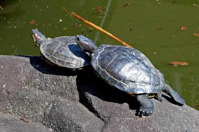 3月の上野動物園~マヌル・ブームとソルジャー・ハシビロコウ_b0355317_22221734.jpg