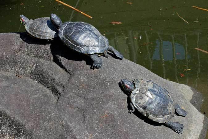 3月の上野動物園~マヌル・ブームとソルジャー・ハシビロコウ_b0355317_22230231.jpg