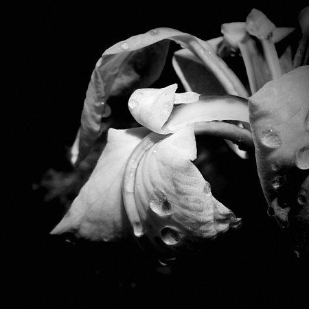 2018年6月21日 花菖蒲の花が咲く  (^-^)_b0341140_17473439.jpg