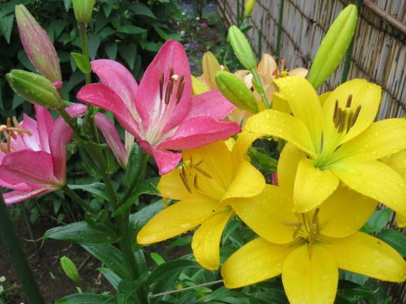 小さなカップ鋳込み&庭の花_d0277868_20375358.jpg