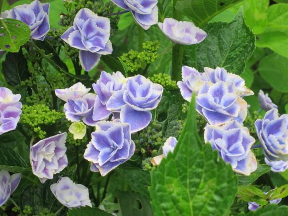 小さなカップ鋳込み&庭の花_d0277868_20383081.jpg