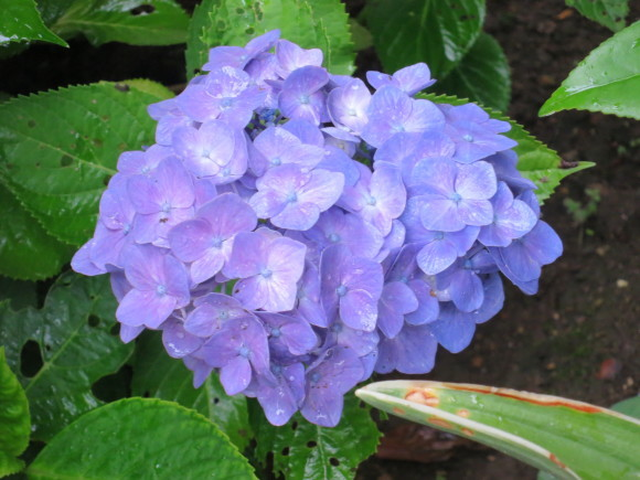 小さなカップ鋳込み&庭の花_d0277868_20384007.jpg