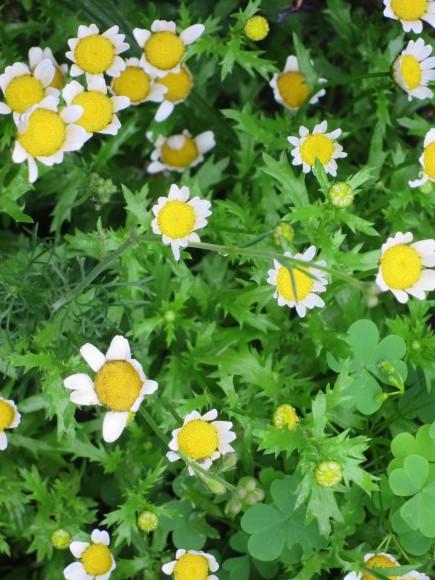 小さなカップ鋳込み&庭の花_d0277868_20394232.jpg
