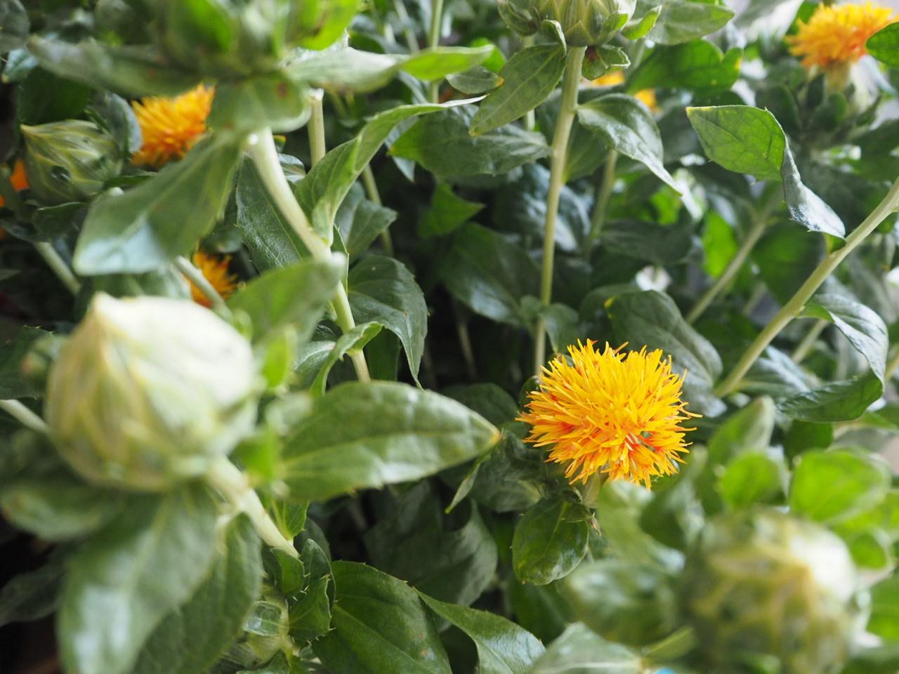 花市場へ仕入れに行きました🚙_d0281783_19143687.jpg