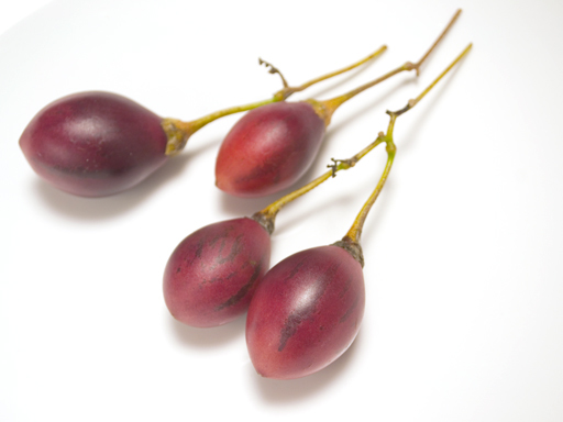 収穫したタマリロ果実