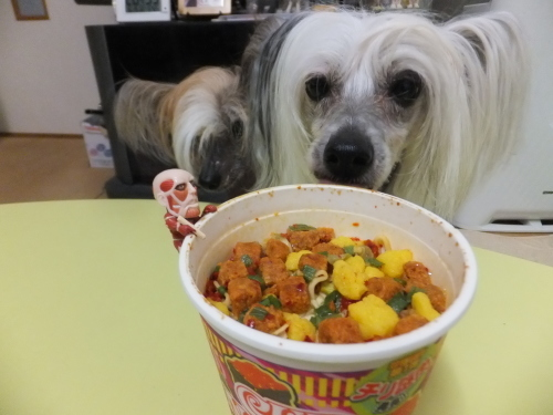 Image result for chinese crested 犬  食べる
