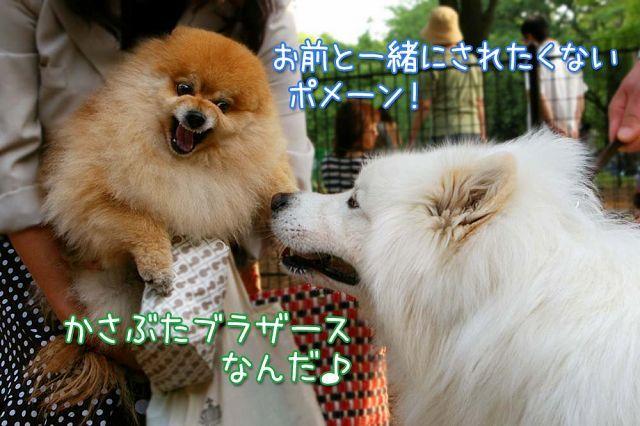 夢の再会_c0062832_17030091.jpg