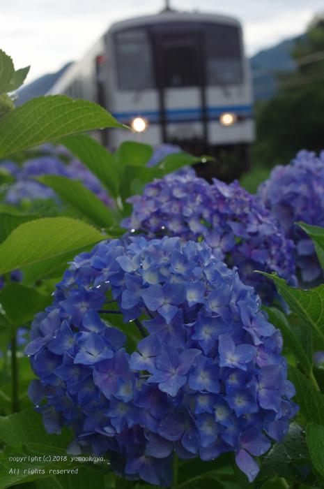 紫陽花滴る_d0309612_00013095.jpg