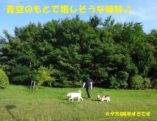 f0121712_22210412.jpg