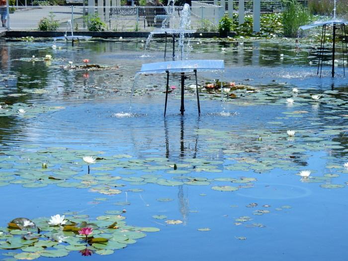中村さん家の「ノウゼンカズラの花」_b0221219_17480282.jpg