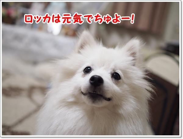 d0013149_00005558.jpg