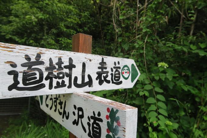 初夏のひとり山歩き_e0348754_11384973.jpg