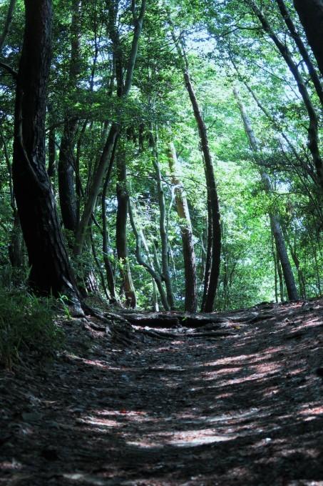 初夏のひとり山歩き_e0348754_11452385.jpg