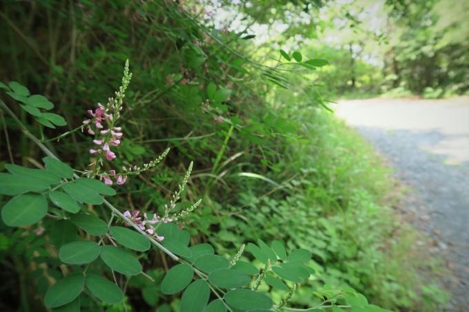 初夏のひとり山歩き_e0348754_12175120.jpg