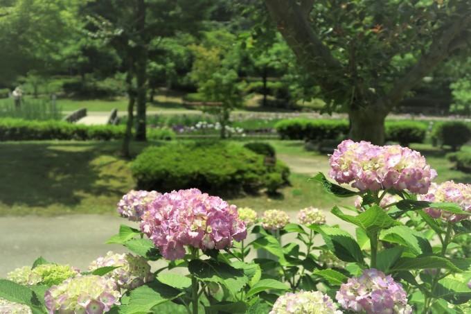 紫陽花さんぽ_e0348754_13245508.jpg