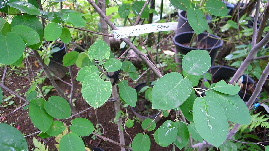 植栽の勉強をしてきました_b0061387_10535842.jpg