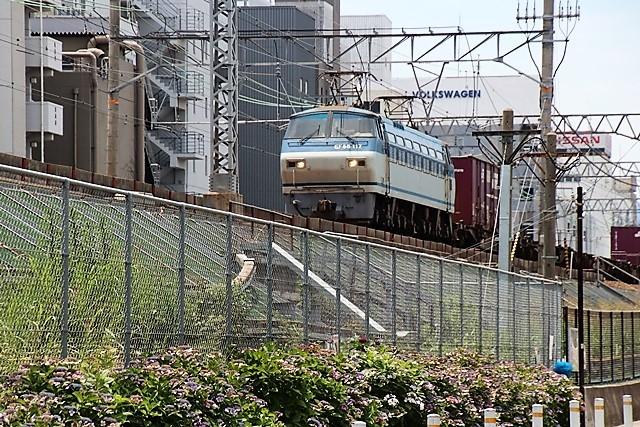 藤田八束の鉄道写真@梅雨に咲く美しい花アジサイに魅せられて・・・貨物列車ワニと沿線に咲く紫陽花_d0181492_15094747.jpg
