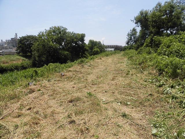 今年最初の滝川の土手普請 草が「みるい」ので、サクサク刈れます!_f0141310_08121612.jpg