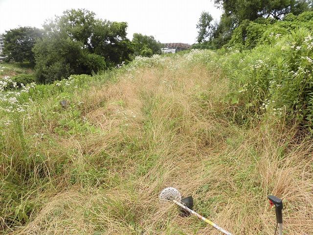 今年最初の滝川の土手普請 草が「みるい」ので、サクサク刈れます!_f0141310_08125494.jpg