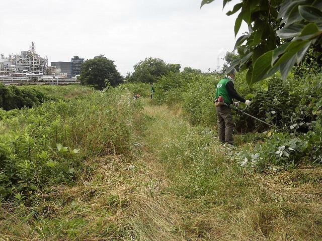 今年最初の滝川の土手普請 草が「みるい」ので、サクサク刈れます!_f0141310_08131719.jpg
