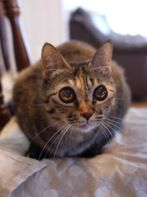 猫のお留守番 天ちゃん麦くん茶くん編。_a0143140_22500985.jpg