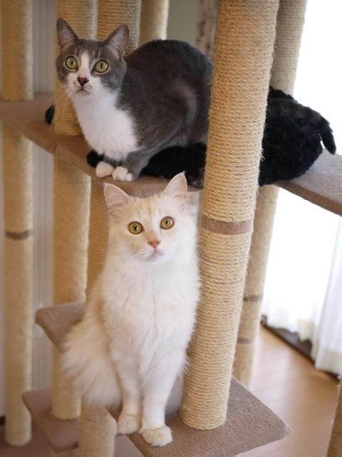 猫のお留守番 天ちゃん麦くん茶くん編。_a0143140_22503329.jpg