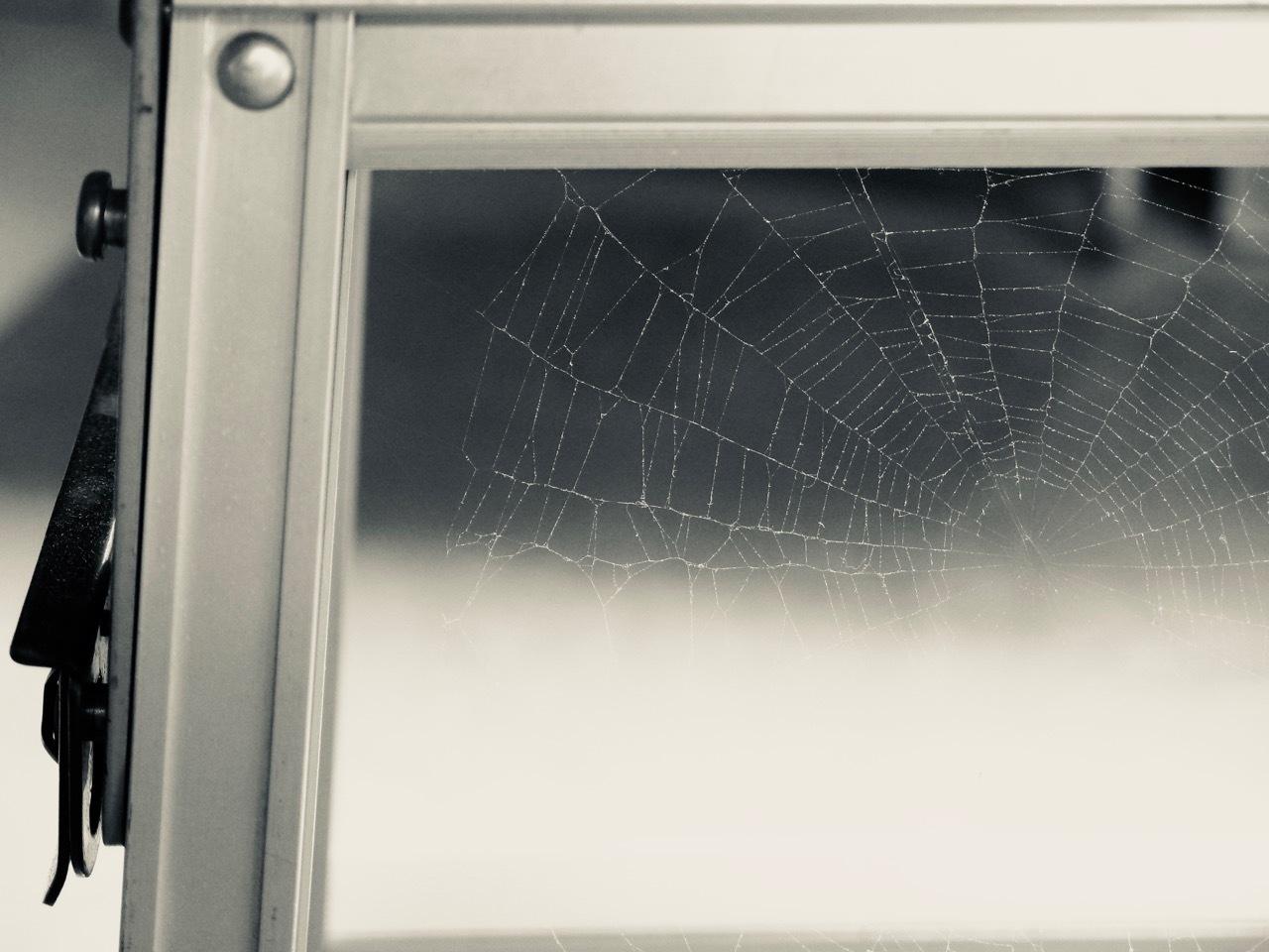 クモの巣_b0177950_17305187.jpg