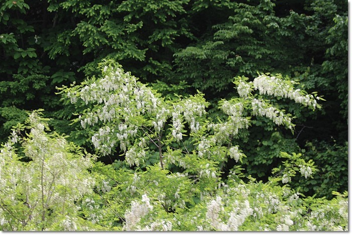 定山渓の森('18・6・10)_f0146493_13553006.jpg