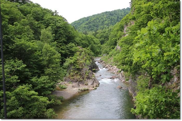 定山渓の森('18・6・10)_f0146493_13555154.jpg