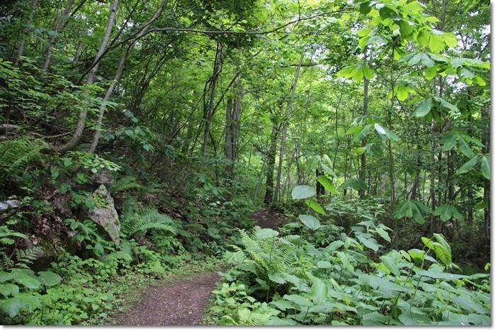 定山渓の森('18・6・10)_f0146493_13555628.jpg