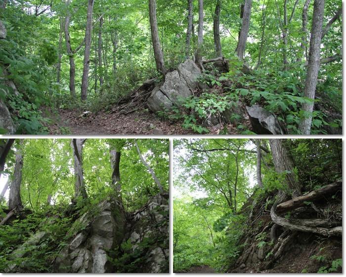 定山渓の森('18・6・10)_f0146493_13560408.jpg