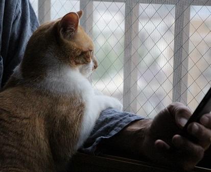 猫の仕事_a0333195_21301180.jpg