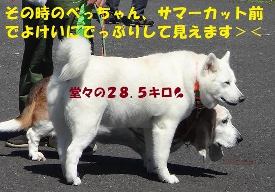 f0121712_22050279.jpg