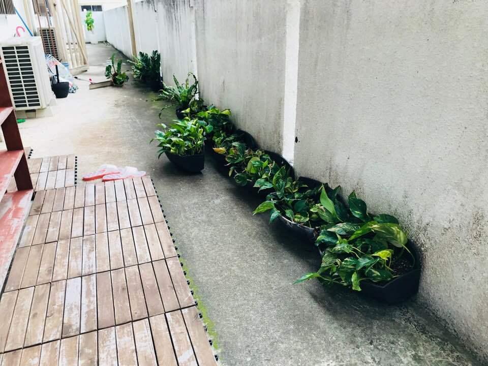 観葉植物☆_b0219726_16345086.jpg