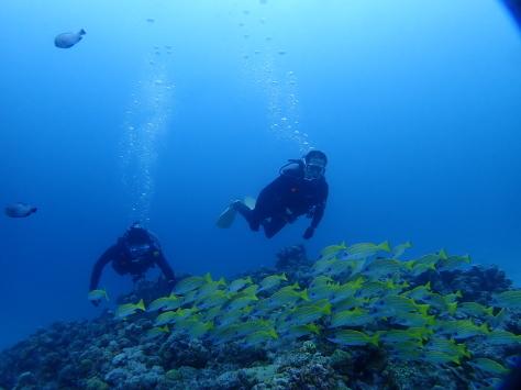 6月18日水納島ファンダイビング&恩納村体験ダイビング_c0070933_20574896.jpg