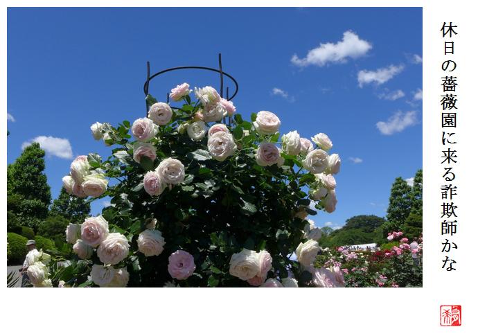休日の薔薇園に来る詐欺師かな_a0248481_21350590.jpg