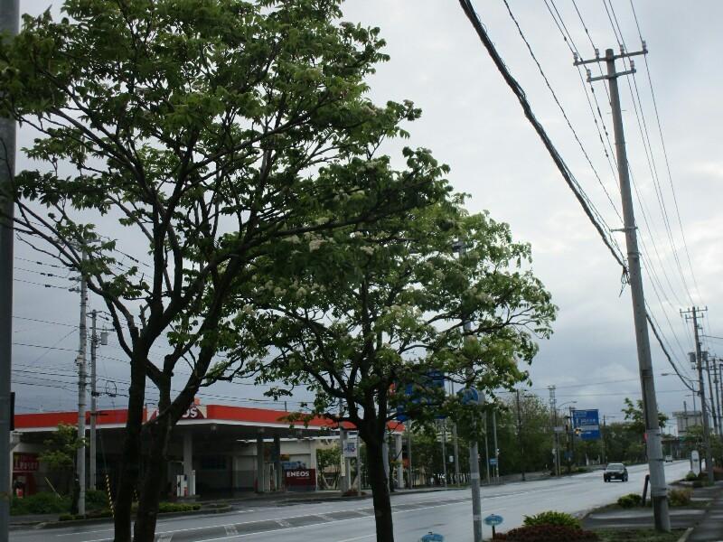 59日目【根室−釧路】暖かかった〜_e0201281_20555199.jpg