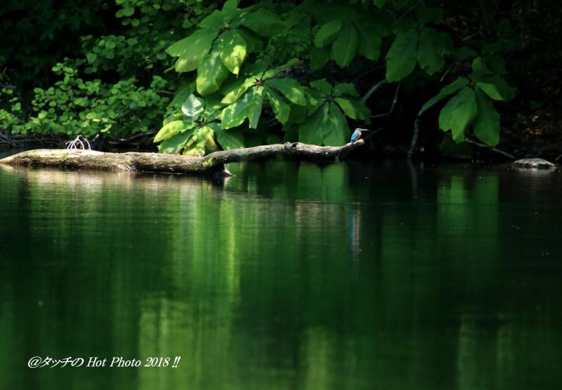 幸せの青い鳥…_d0027893_22222399.jpg