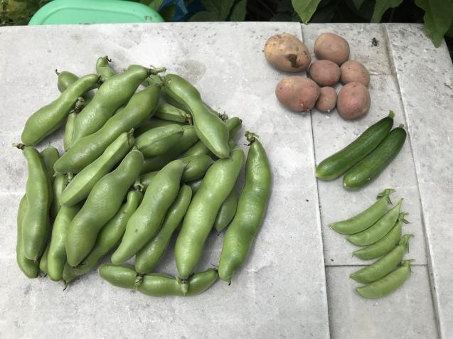 超うれしい収穫物!_c0369304_22225183.jpg