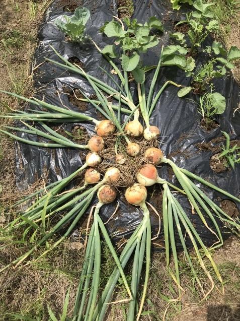 超うれしい収穫物!_c0369304_22232103.jpg