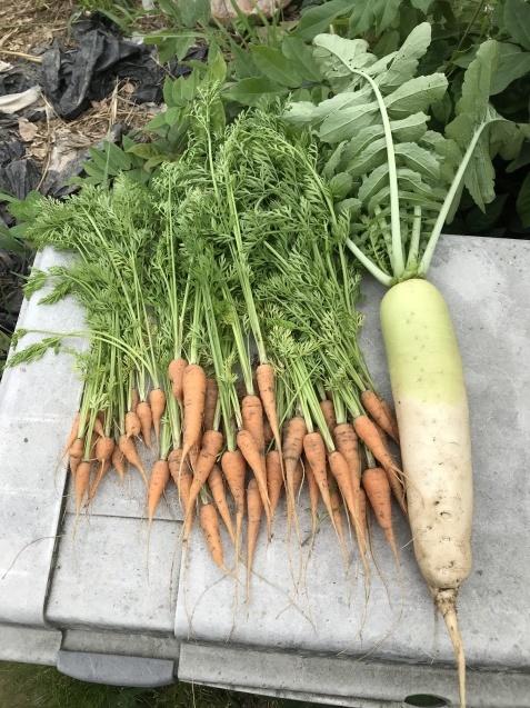 超うれしい収穫物!_c0369304_22242086.jpg