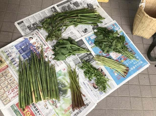 超うれしい収穫物!_c0369304_22262299.jpg