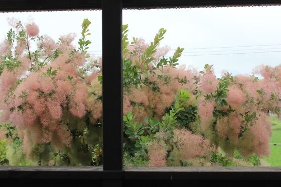 雨_b0132338_08575842.jpeg