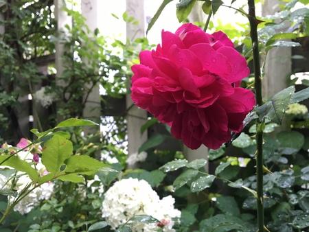 雨の庭に_e0070939_16424234.jpg