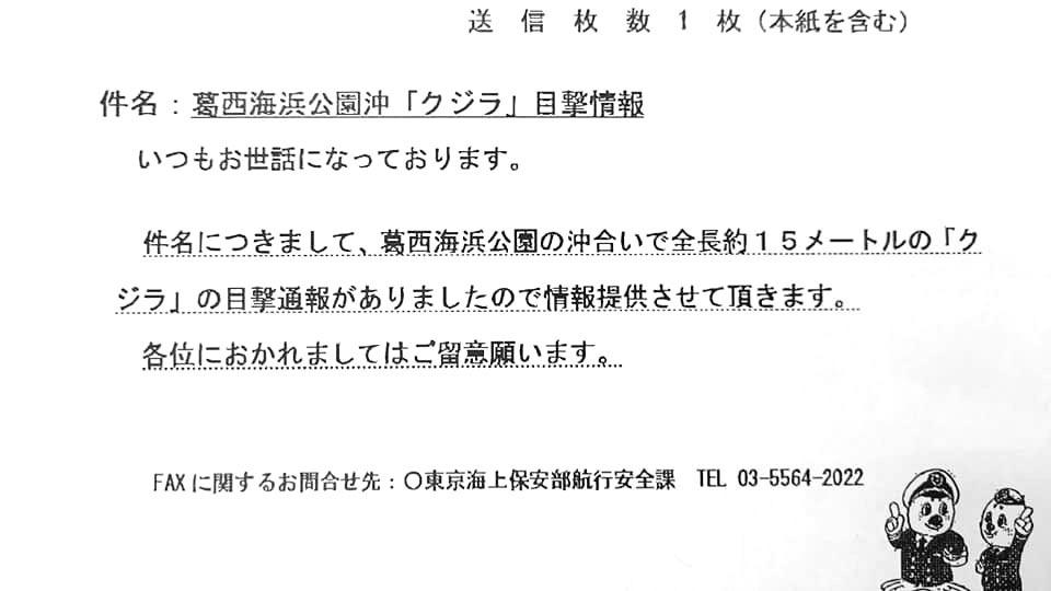 東京湾にクジラ_f0009039_10455258.jpg