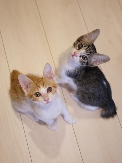 猫のお留守番 まさおくんゆきおくん編。_a0143140_17534462.jpg