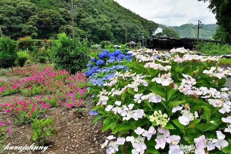 お母さんのお花畑の中で・・・_c0173762_20264189.jpg